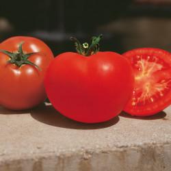 Tomato Saint-Pierre